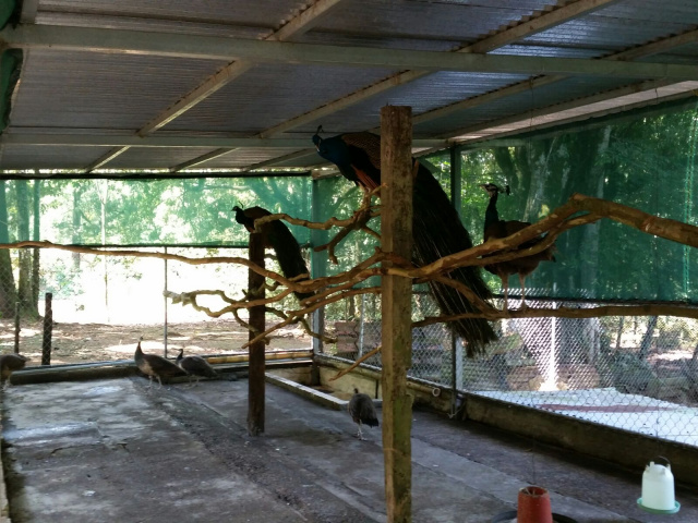 More Bird Cage Improvements - Zoo Costa RIca - La Marina